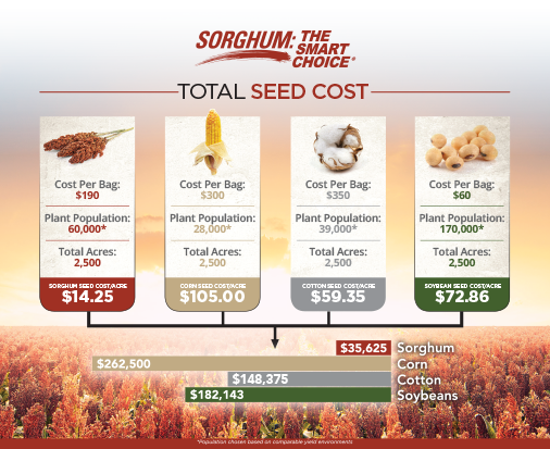 Sorghum Seed Infographic